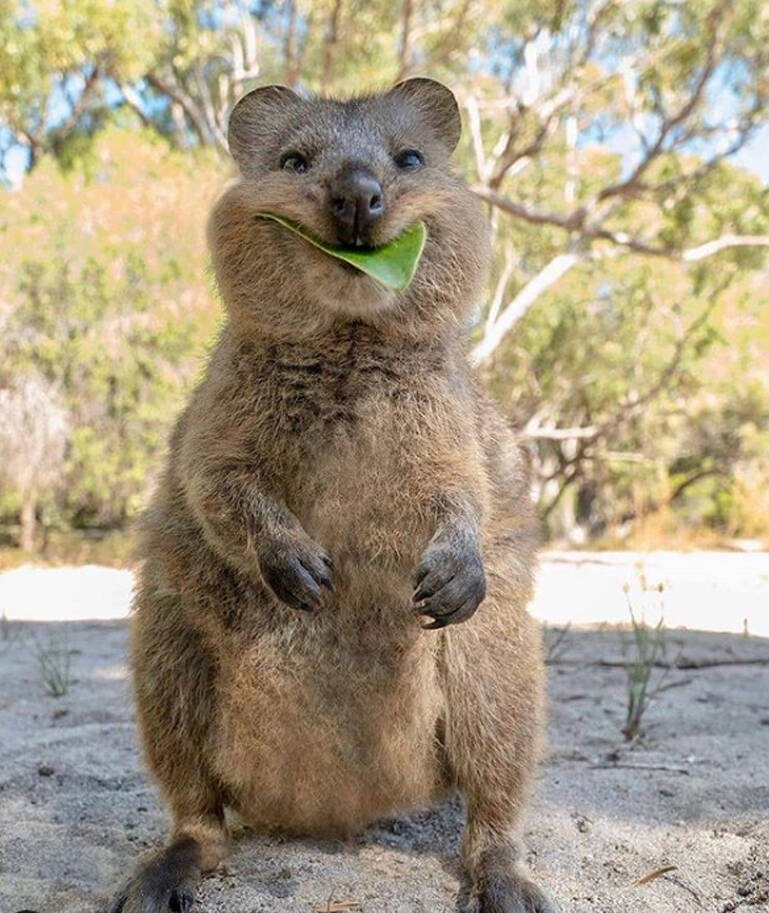 marsupial sorridente